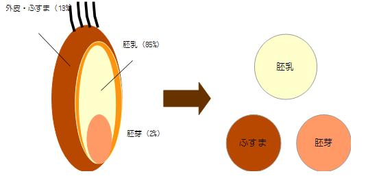 小麦粒の構造
